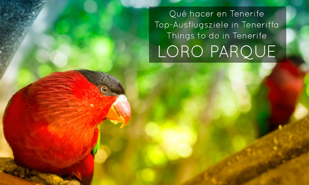 Things-to-do-Tenerife-Loro-Parque