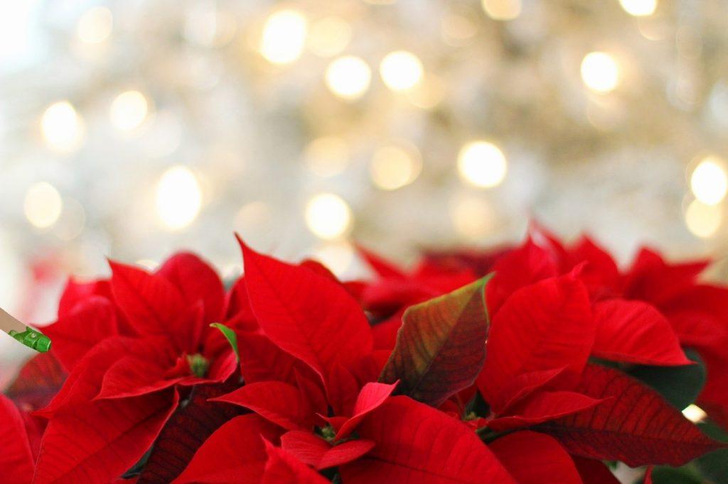 christmas-tenerife